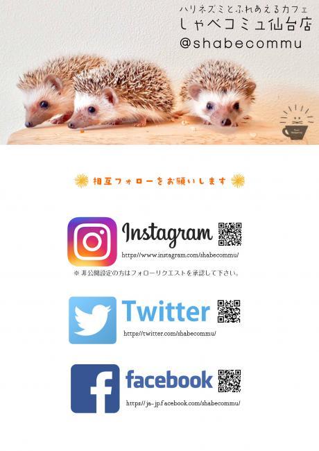 3月21日(木)11:00-16:00ハリネズミちゃんとふれあえる無料体験イベント開催!