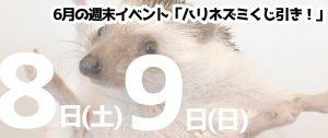 6月1日(土)2日(日) ハリネズミベビーとのふれあい体験 仙台・山形同時開催