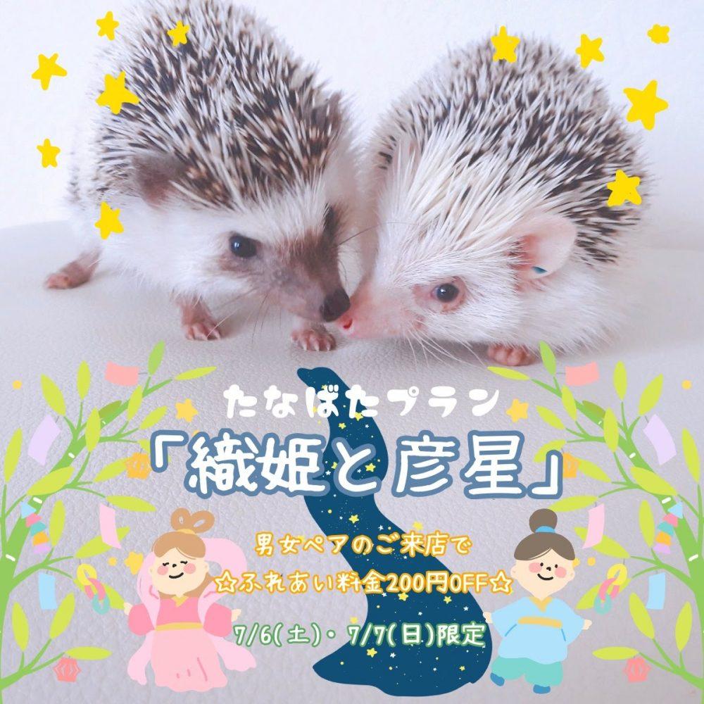 今週末は男女ペアのための七夕プラン【織姫と彦星】を開催!!